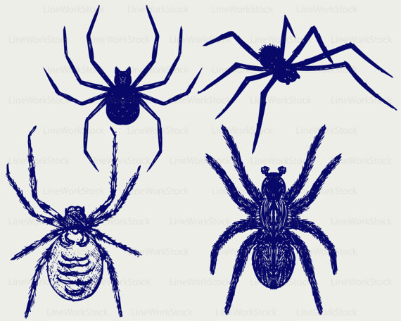 Arachnid svg #1, Download drawings