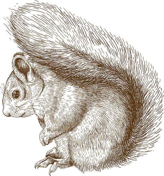 Arboreal Rodent clipart #16, Download drawings