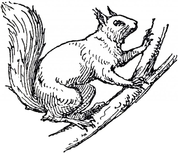 Arboreal Rodent clipart #1, Download drawings