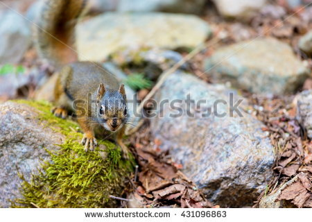Arboreal Rodent clipart #15, Download drawings