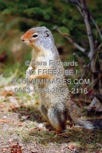 Arboreal Rodent clipart #2, Download drawings