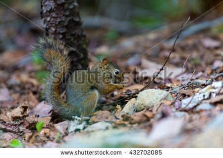 Arboreal Rodent clipart #18, Download drawings