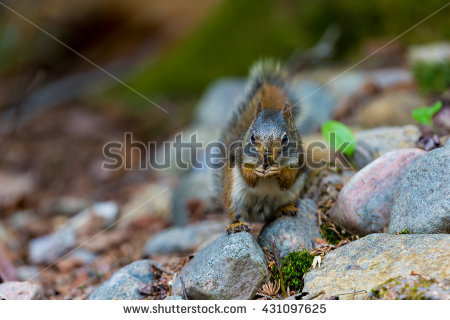 Arboreal Rodent clipart #3, Download drawings