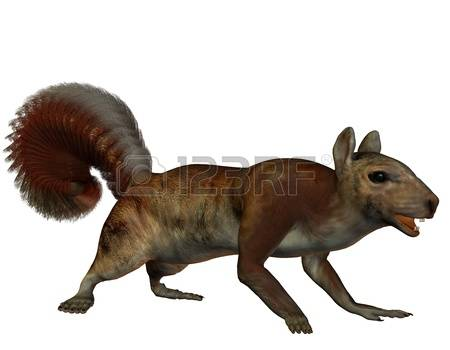 Arboreal Rodent clipart #8, Download drawings