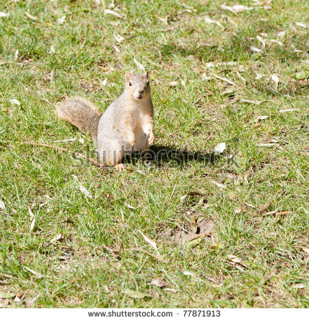 Arboreal Rodent clipart #10, Download drawings