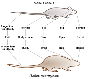 Arboreal Rodent svg #20, Download drawings