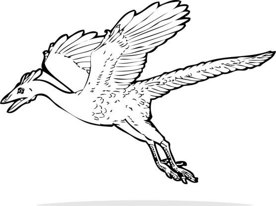 Archaeopteryx clipart #1, Download drawings