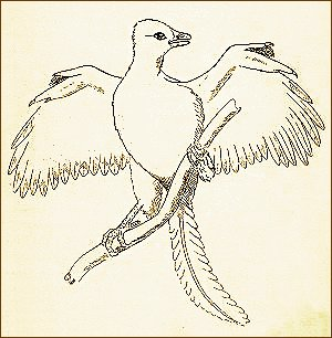 Archaeopteryx clipart #7, Download drawings