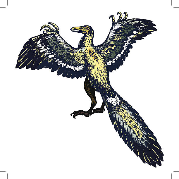 Archaeopteryx clipart #19, Download drawings