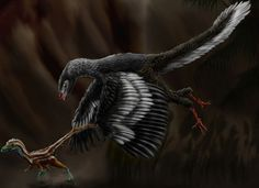 Archaeopteryx svg #4, Download drawings