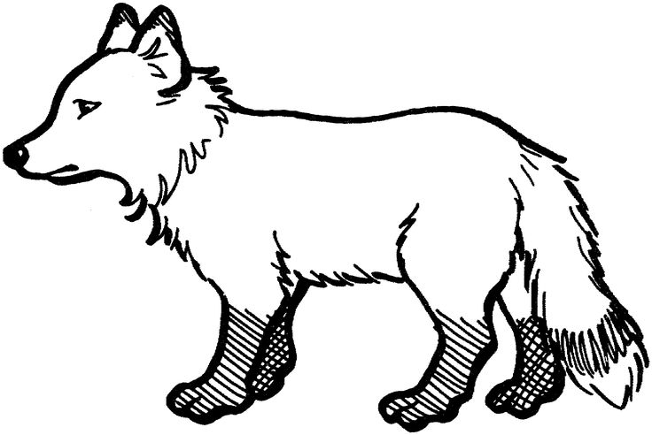 Arctic Fox clipart #7, Download drawings