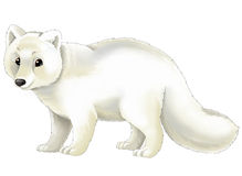 Polar Fox clipart #19, Download drawings