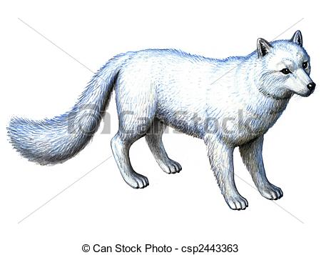 Polar Fox clipart #13, Download drawings