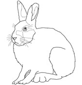 Arctic Hare clipart #11, Download drawings