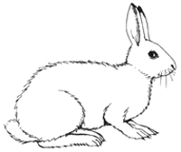 Arctic Hare clipart #1, Download drawings