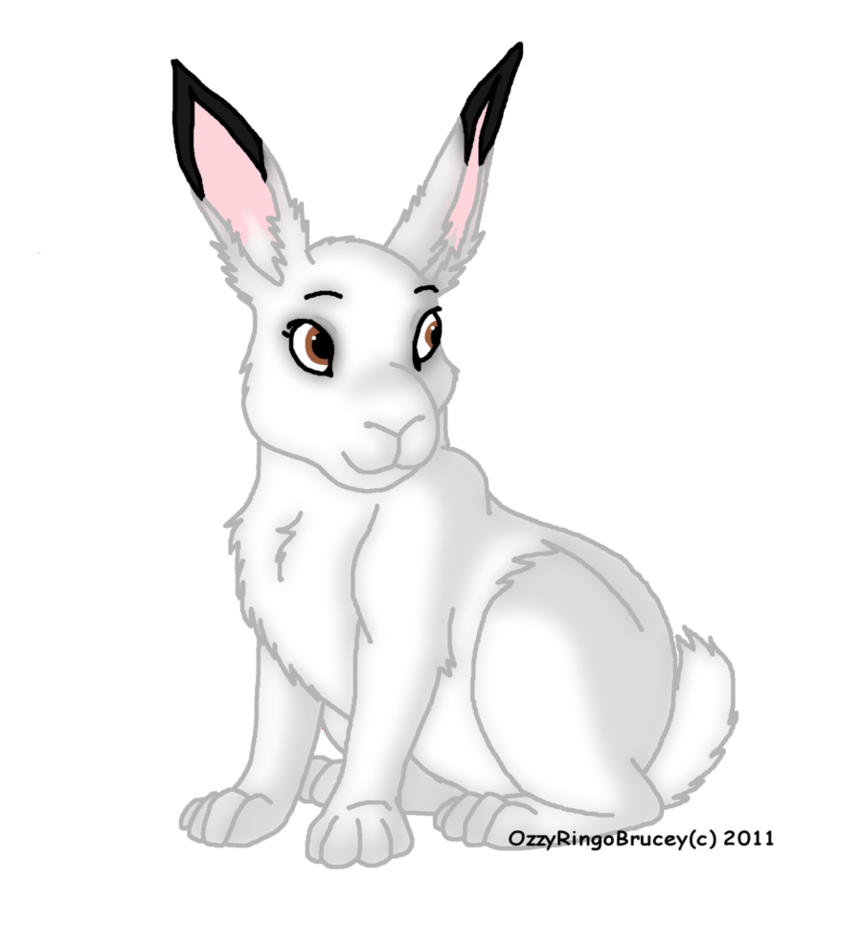 Arctic Hare clipart #6, Download drawings