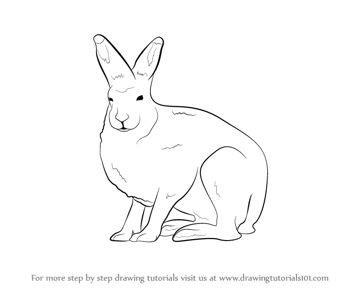 Arctic Hare svg #11, Download drawings