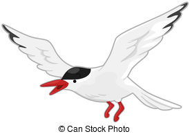 Tern clipart #19, Download drawings