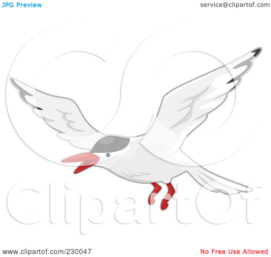Terns clipart #7, Download drawings