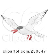 Terns clipart #2, Download drawings