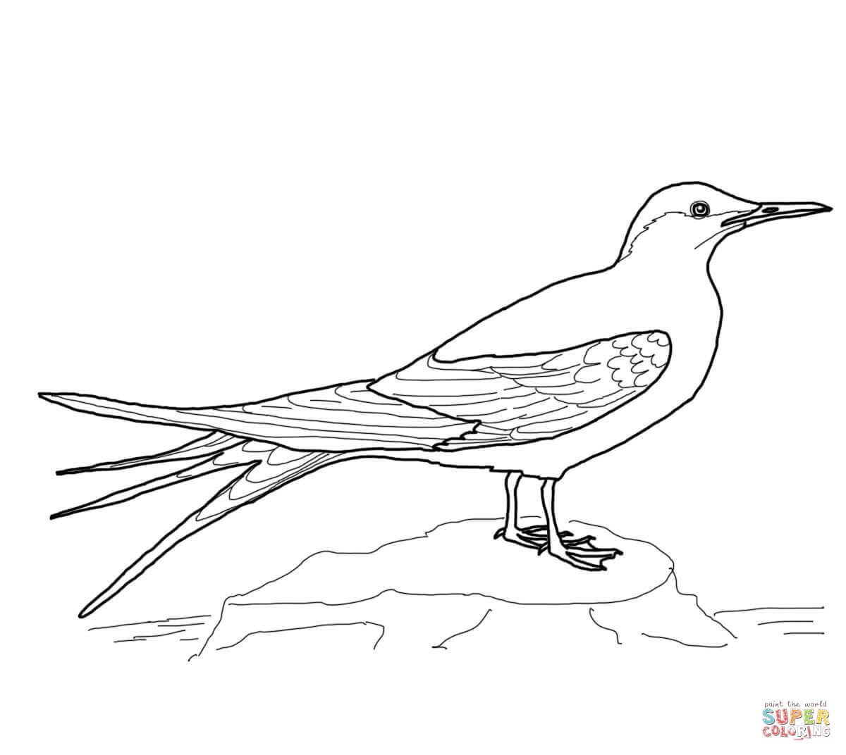 Arctic Tern clipart #2, Download drawings