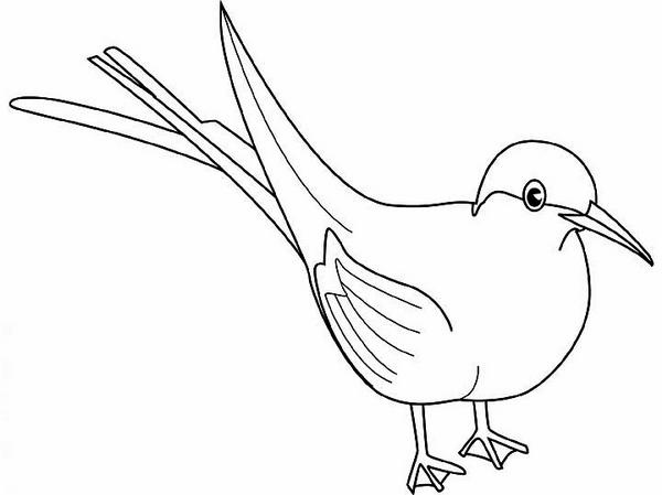 Arctic Tern clipart #3, Download drawings
