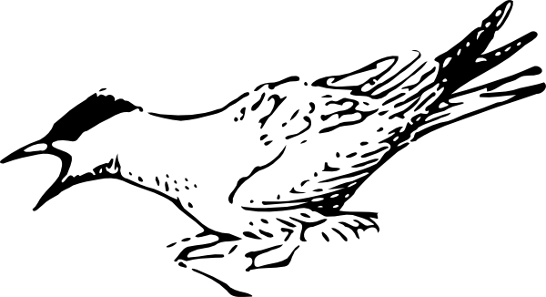 Tern clipart #12, Download drawings