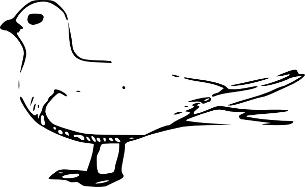 Tern clipart #13, Download drawings