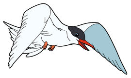 Tern clipart #18, Download drawings
