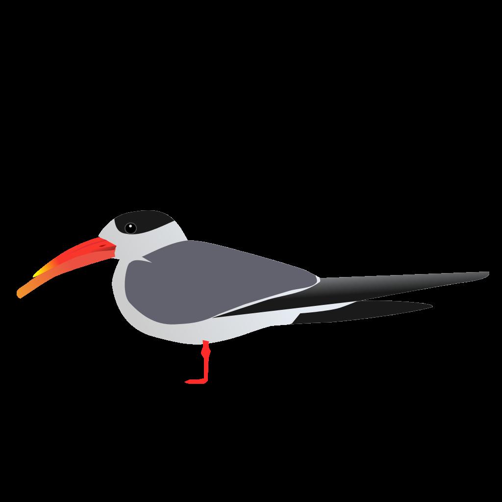 Arctic Tern svg #13, Download drawings