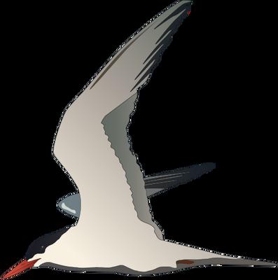 Arctic Tern svg #12, Download drawings