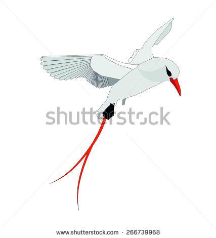 Arctic Tern svg #6, Download drawings