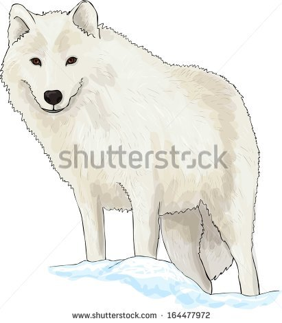 Arctic Wolf clipart #18, Download drawings