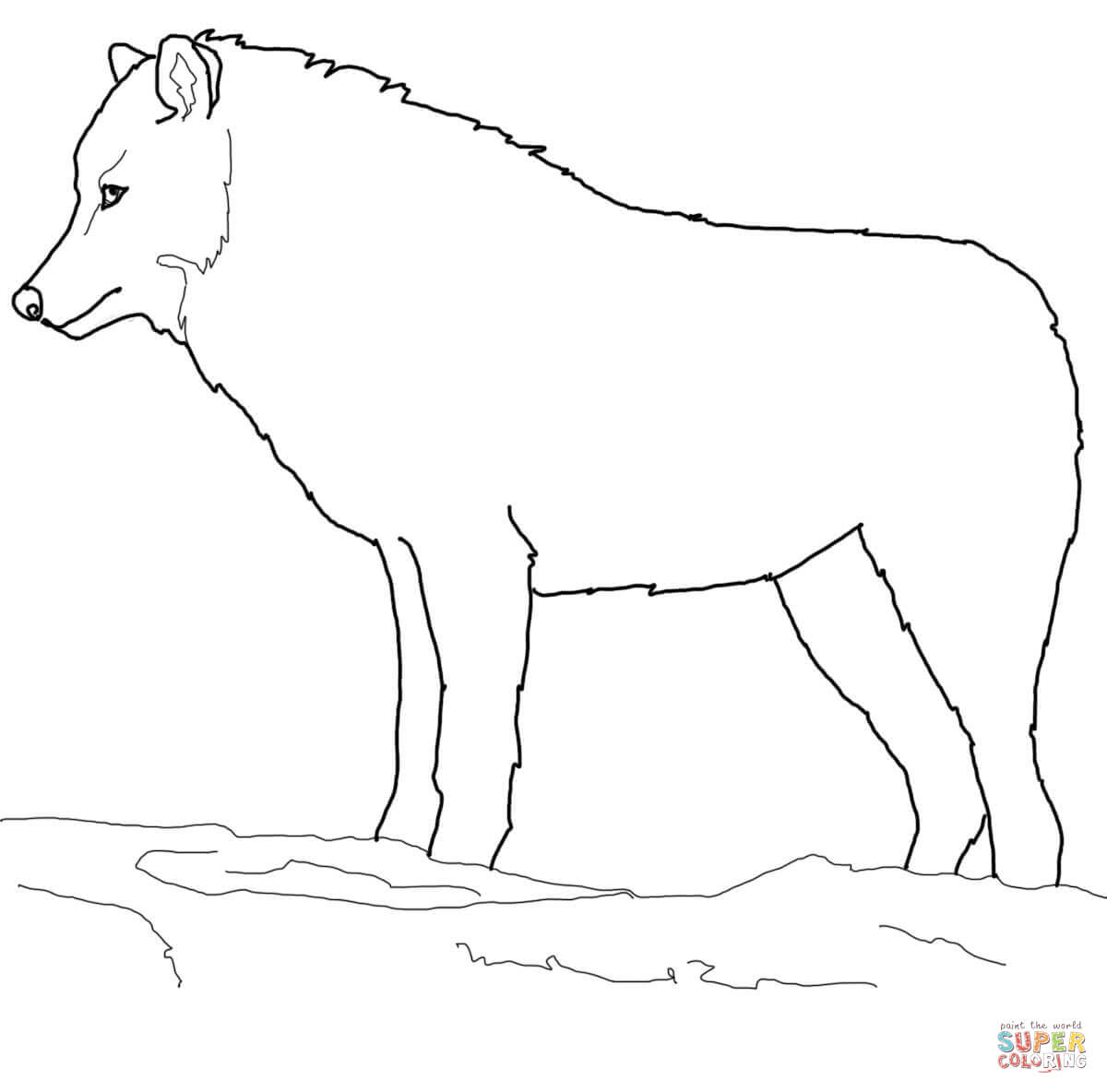Arctic Wolf clipart #4, Download drawings