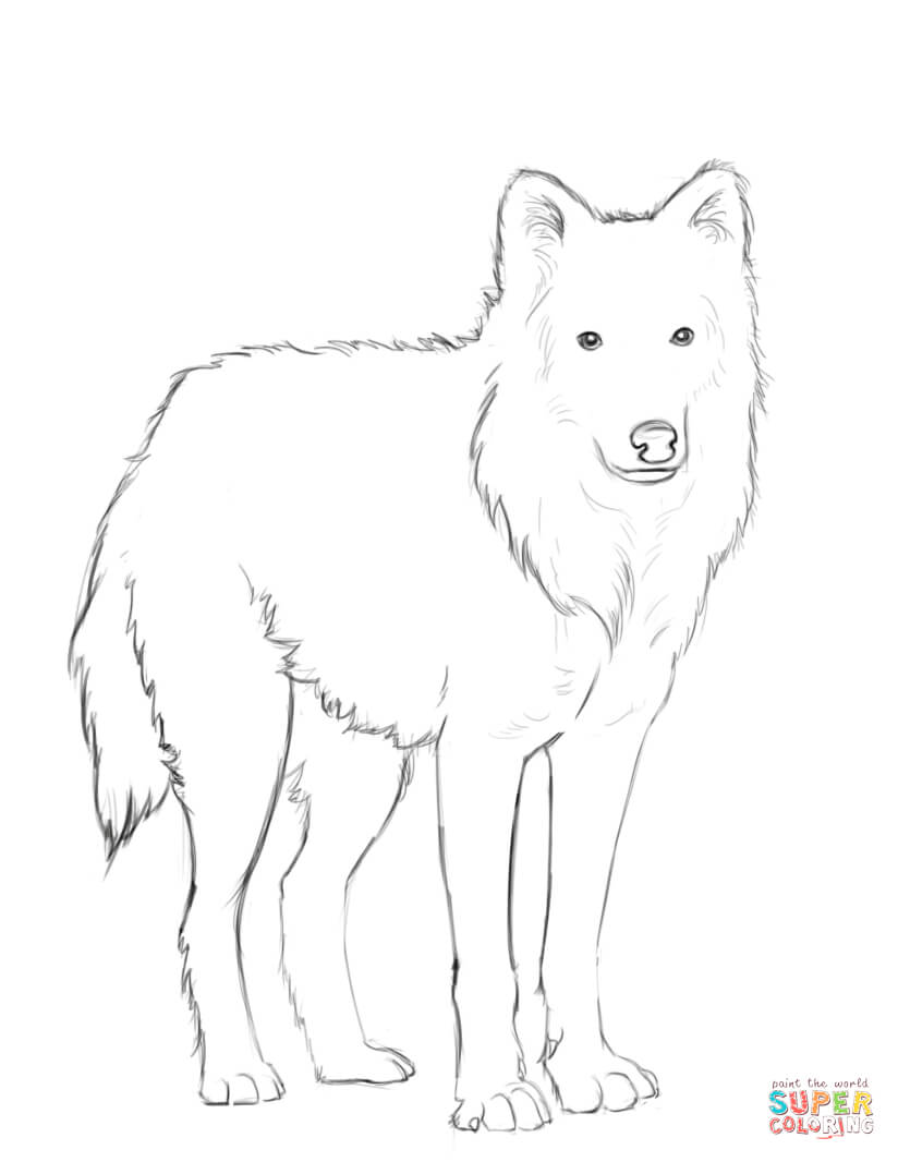 Arctic Wolf clipart #16, Download drawings