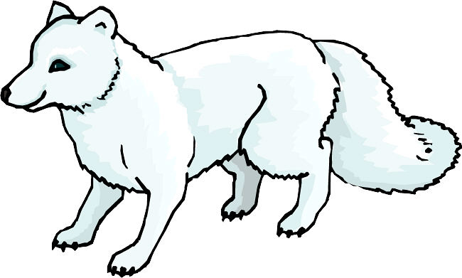 Polar Fox clipart #12, Download drawings
