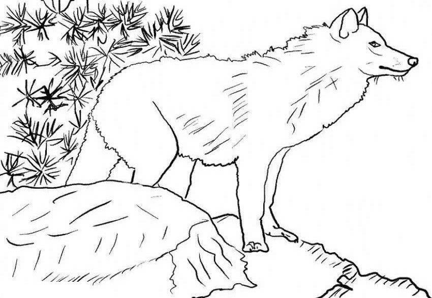 Arctic Wolf coloring #13, Download drawings