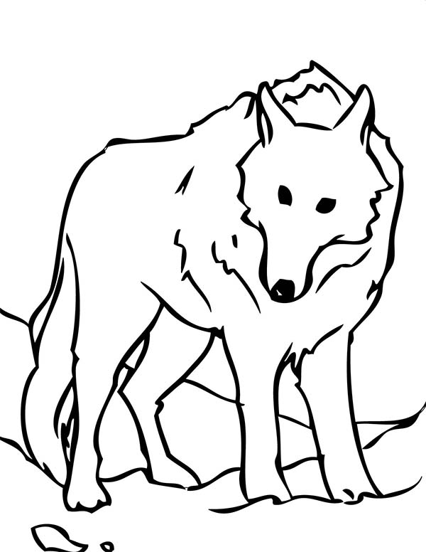 Arctic Wolf coloring #10, Download drawings