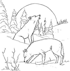 Arctic Wolf coloring #11, Download drawings