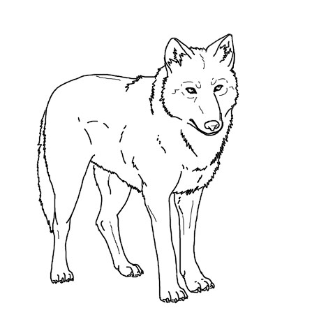 Arctic Wolf coloring #2, Download drawings
