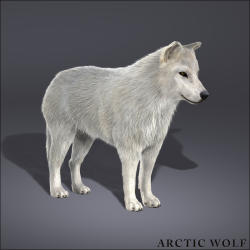 Arctic Wolf svg #14, Download drawings