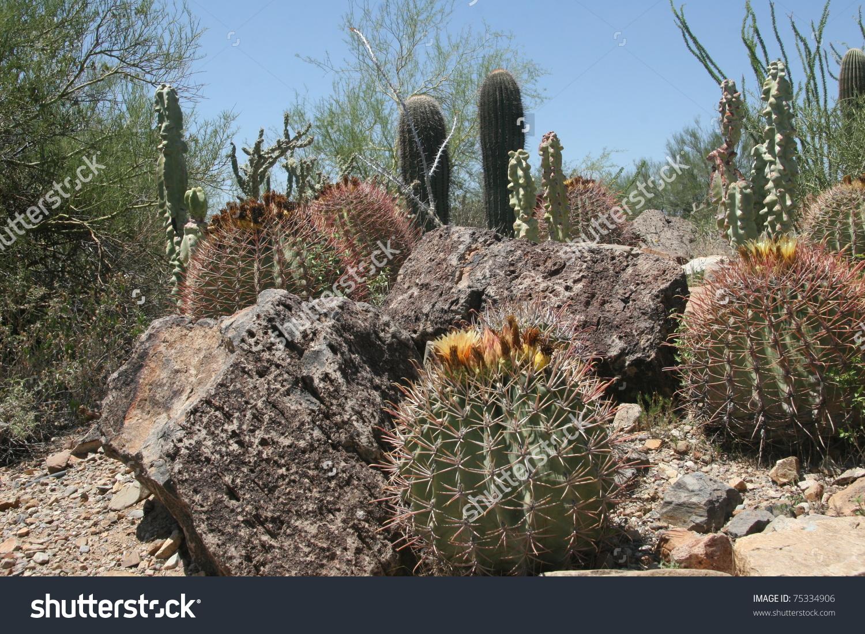 Arizona-sonora Desert Museum clipart #1, Download drawings