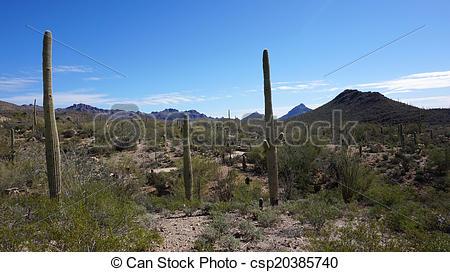 Arizona-sonora Desert Museum clipart #7, Download drawings