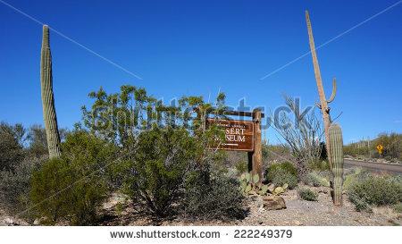 Arizona-sonora Desert Museum clipart #8, Download drawings