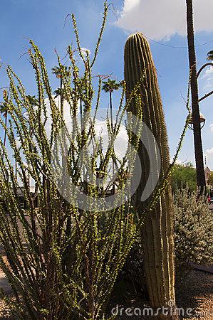 Arizona-sonora Desert Museum clipart #9, Download drawings
