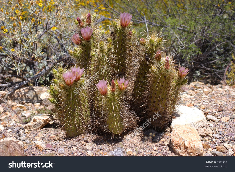 Arizona-sonora Desert Museum clipart #2, Download drawings