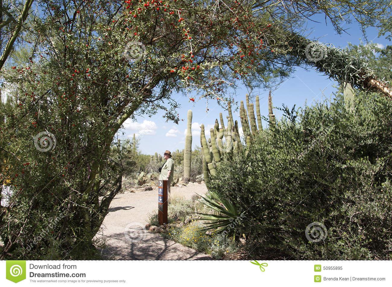 Arizona-sonora Desert Museum clipart #14, Download drawings