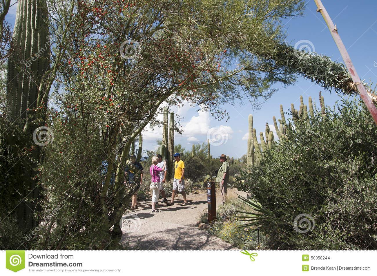 Arizona-sonora Desert Museum clipart #15, Download drawings