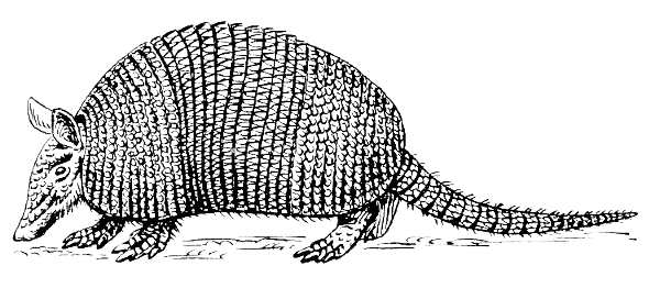 Armadillo clipart #6, Download drawings