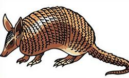 Armadillo clipart #18, Download drawings